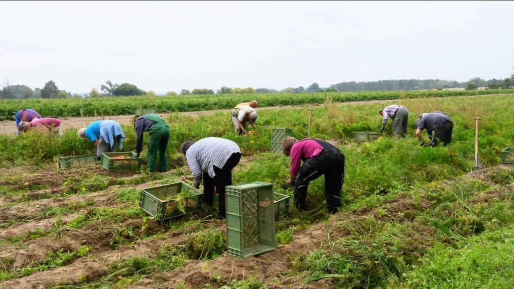 In der Uckermarck produziert Brodowin Gemüse, Obst, Milch und Fleisch nach Demeter-Kriterien